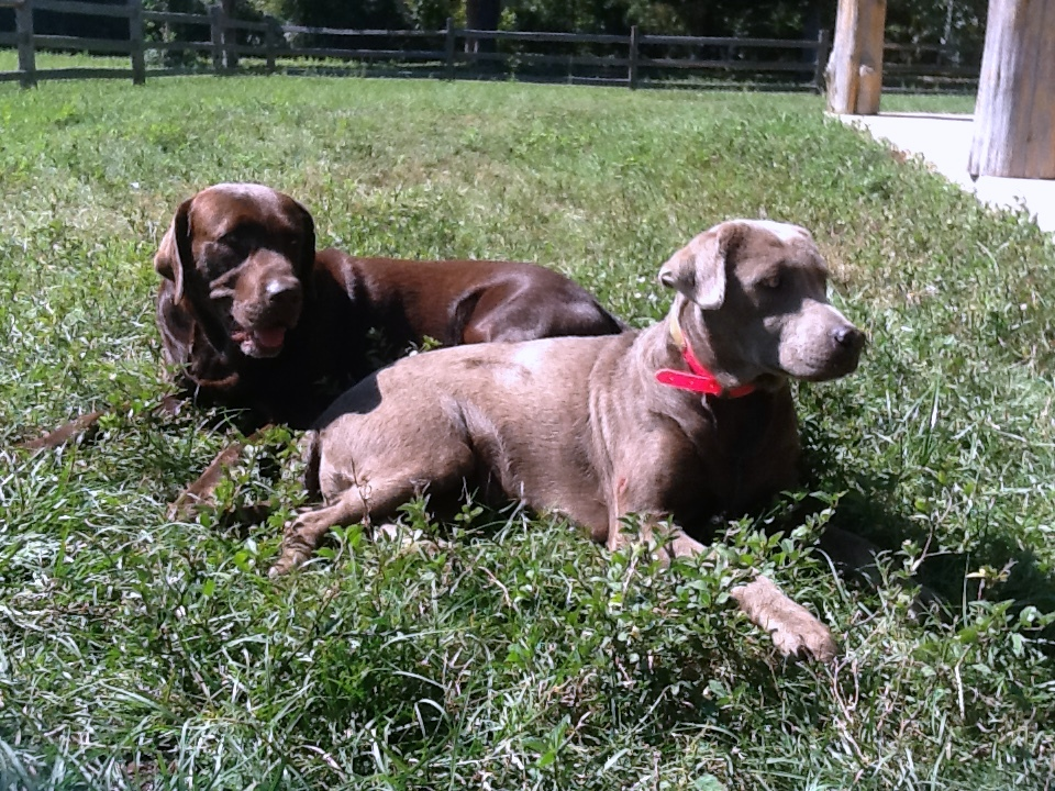 Roscoe & Abby